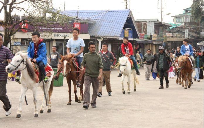 Pony ride darjeeling